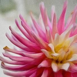 Karen Mackey - Cactus Dahlia In Pink