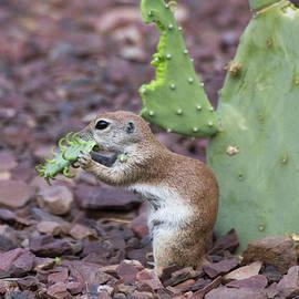 Cactus for dinner