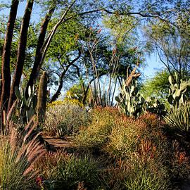 Tammy Espino - Cactus garden