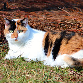 Cynthia Guinn - Calico Beauty