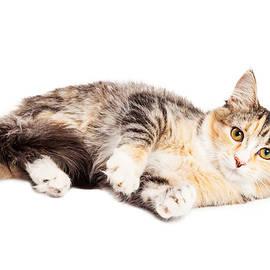 Calico Kitty Laying Over White - Susan Schmitz