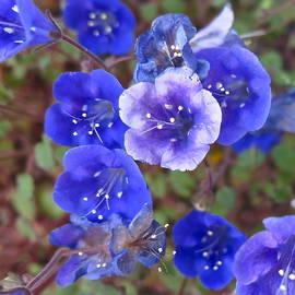 Bonnie See - California Blues
