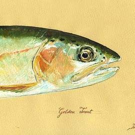 California golden trout - Juan  Bosco
