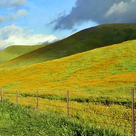 Kathy Yates - California Hills in Spring
