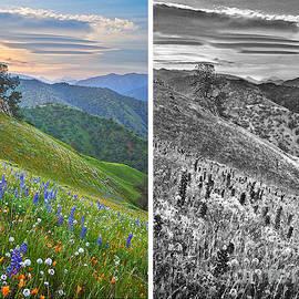 Frank Bez - California Wild Flower Contrasts