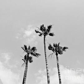 Fei A - Californian Sky