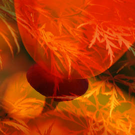 Lyn  Perry -  Japanese Maple with Poppy