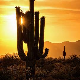 Saija Lehtonen - Call It Desert Gold