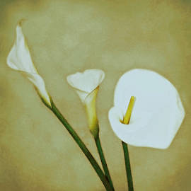 Kathy Franklin - Calla Lilies On Gold