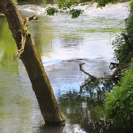 Rumyana Whitcher - Calm Waters Creek