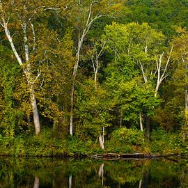 Karol Livote - Calming Trees