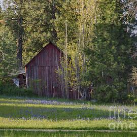 Idaho Scenic Images Linda Lantzy - Camas and Barn