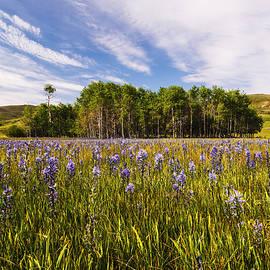 Vishwanath Bhat - Camas Lily Bloom in Camas Prairie Idaho USA