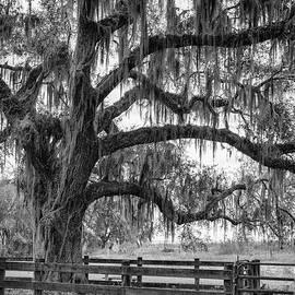 Dawna Moore Photography - Camp Cattle Ranch on the La Chua Trail, Paynes Prairie, Florida
