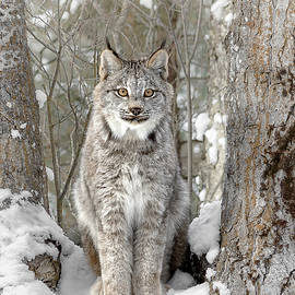Wes and Dotty Weber - Canadian Wilderness Lynx D2024