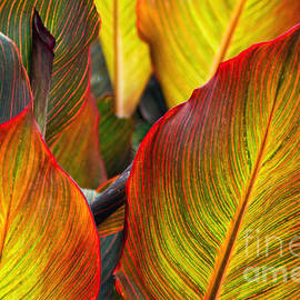 Gary Holmes - Canna Beleave the Colors
