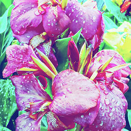 Dorothy Berry-Lound - Canna Lily with Water Drops