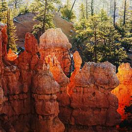Vishwanath Bhat - Canyon Glow in Bryce Canyon National Park Utah