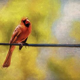 Cathy Kovarik - Cardinal