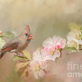 Pam  Holdsworth - Cardinal Delight
