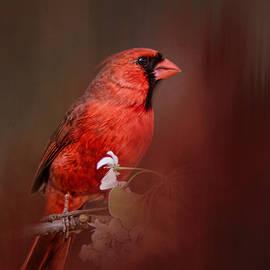 Jai Johnson - Cardinal In Antique Red