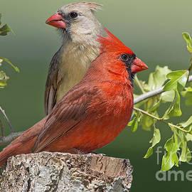 Bonnie Barry - Cardinal Sentries