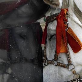 Tianxin Zheng - Carriage Horse