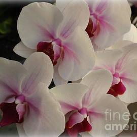 Photographic Art and Design by Dora Sofia Caputo - Cascade of White and Purple Orchids