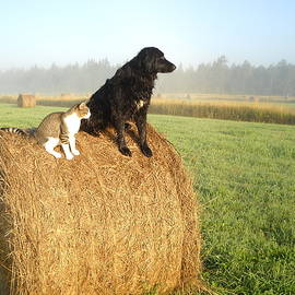 Kent Lorentzen - Cat and Dog on Hay Bale