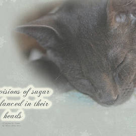 Mother Nature - Cat Christmas Greeting Card - Kitty Asleep