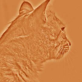 Damijana Cermelj - Cat