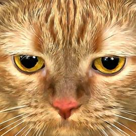 Sergey Lukashin - Cat Musya