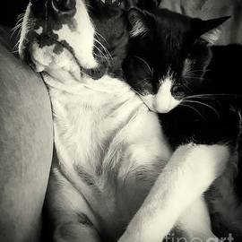 Sarah Labadie - Cat Nap Complete With Dog