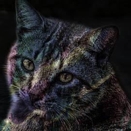 Lesa Fine - Cat Of Many Colors Soft