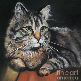 Maja Sokolowska - Cat pastel drawing