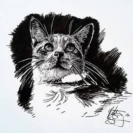 Kirsten Slaney - Cat with Ink