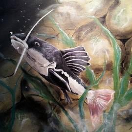 Judit Szalanczi - Catfish