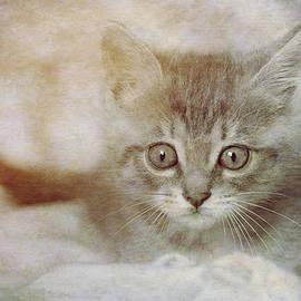 Loriental Photography - Cat