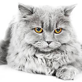 Serhii Kucher - Cat