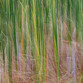 Patti Deters - Cattail Abstract #1