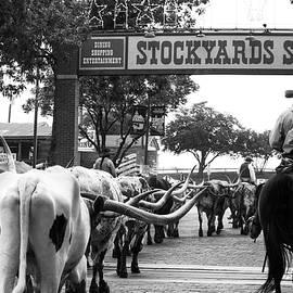 Roberta Byram - Cattle Drive 21