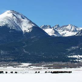 John Bartelt - Cattle Ranching During Winter