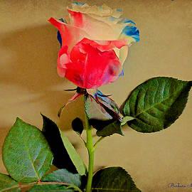 Barbara Zahno - Celebration Rose