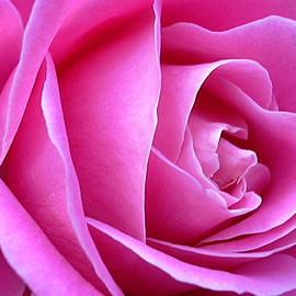Shirley Stevenson Wallis - Center of Pink Rose