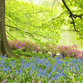 Regina Geoghan - Central Park Spring Flowers