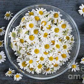 Elena Elisseeva - Chamomile flowers in bowl