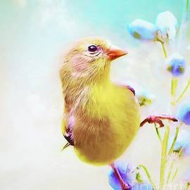 Tina LeCour - Charming Goldfinch