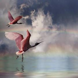 Stephen Warren - Chasing Rainbows
