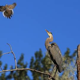 Lynn Hopwood - Checking out the hawk
