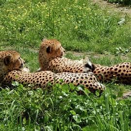 Terry Cobb - Cheetah Chillin